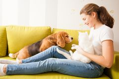 Bonnes relations entre la fille et ses animaux familiers Image stock