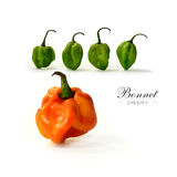 Bonnet Peppers Royalty Free Stock Photos