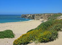 Bonny Doon Beach with wildflowers, California. Panorama of Bonny Doon Beach with wildflowers near Davenport, California Royalty Free Stock Images