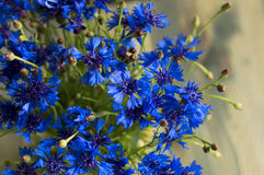 Bonny sunny bluebottles flowers Stock Images