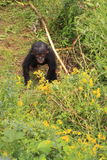 Bonobo baby monkey looking up Stock Images