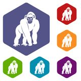 Bonobo icons set hexagon Stock Image