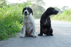 Bons chiens Images stock
