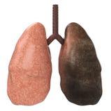 Bons e pulmões maus ilustração stock