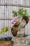 Bonsaïs dans le jardin japonais Photo libre de droits