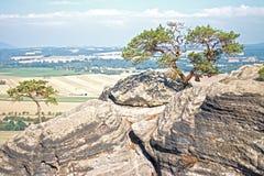Bonsaïs naturels sur la roche Photo stock