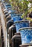 Bonsai Royalty-vrije Stock Foto's