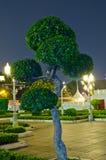Bonsai stock foto