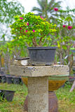 Bonsai Fotografering för Bildbyråer