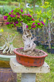Bonsai Stock Foto's