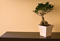 Bonsai. On the brown table Royalty Free Stock Photos
