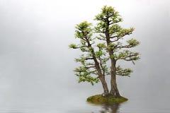 Free Bonsai Royalty Free Stock Images - 55662059