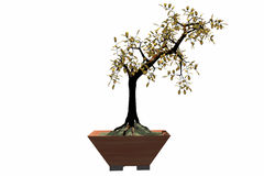 bonsai Royaltyfri Bild