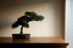 bonsai royaltyfria foton