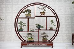 Free Bonsai And Penjing Landscape With Miniature Stock Photos - 142127703