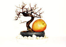 Bonsai with apple Royalty Free Stock Images