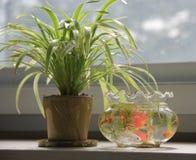 Bonsai and aquarium Royalty Free Stock Photography