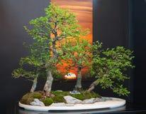 Bonsai Art Stock Photography