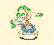 Bonsai art Stock Photos