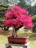 Bonsai, basin natural landscape art performance. Royalty Free Stock Photos