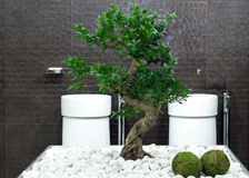 Bonsai bathroom Stock Image