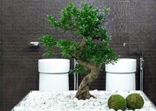 Bonsai bathroom stock image