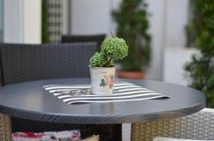 Bonsai on black bar table Stock Photography