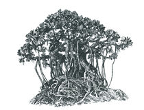 Bonsai,   , black and white . Tree bonsai,black and white,   drawing pen Stock Photos