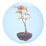 Bonsai in bubble Stock Photos