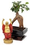 Bonsai and buddha Stock Images