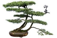 bonsai cedru wrażenie Obrazy Royalty Free