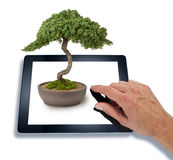 Bonsai Computer Tablet Business. A hand using a computer tablet with a bonsai tree coming out of the screen on a white background Royalty Free Stock Image