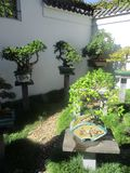 Potted Bonsai plants courtyard garden stock photography