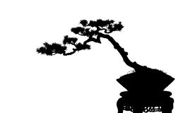 Bonsai cucoloris Royalty Free Stock Photo