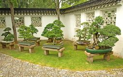 Bonsai on display. In Chinese Gardens in Singapore Stock Photography