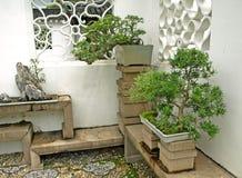 Bonsai on display Stock Photos