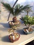 Bonsai display Stock Photos