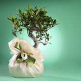 Bonsai Drzewo Zdjęcie Stock