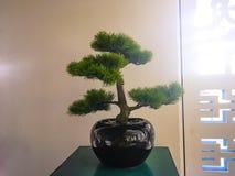 Bonsai drzewo w doniczkowym zdjęcie royalty free