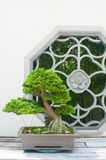 Bonsai e finestra Immagine Stock