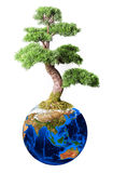 Bonsai from earth planet Royalty Free Stock Photos