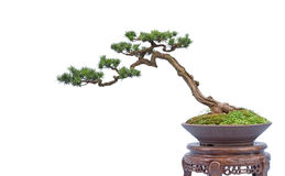 Bonsai. Eastphoto, tukuchina, Bonsai, nature beauty Stock Photos