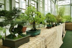 Bonsai exhibit. In a greenhouse Stock Images