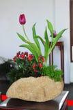 Bonsai exhibition Stock Photo