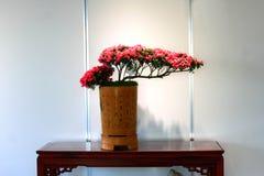 Bonsai exhibition Royalty Free Stock Photography