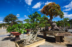Bonsai in the flower park Royalty Free Stock Images