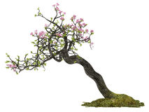 Bonsai flower plant tree isolated Stock Images
