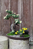 Bonsai flower and tree Stock Images