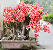 A bonsai of flowers Royalty Free Stock Photos