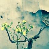 Bonsai framme av en fläckig vägg Royaltyfri Foto